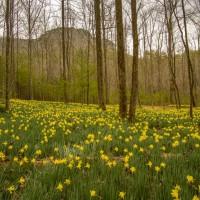 Daffodil flats EPIC!!!